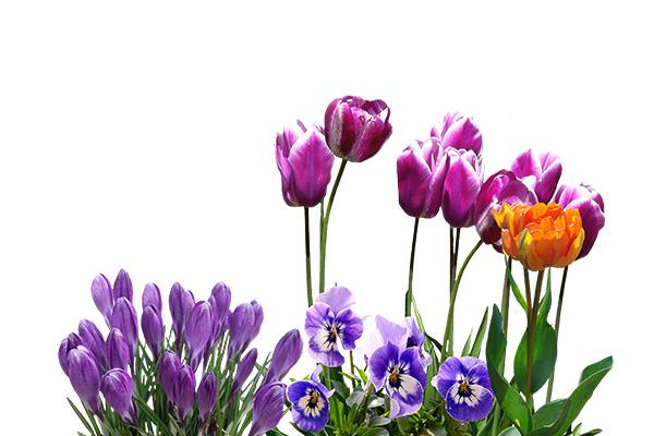 ico kwiaty