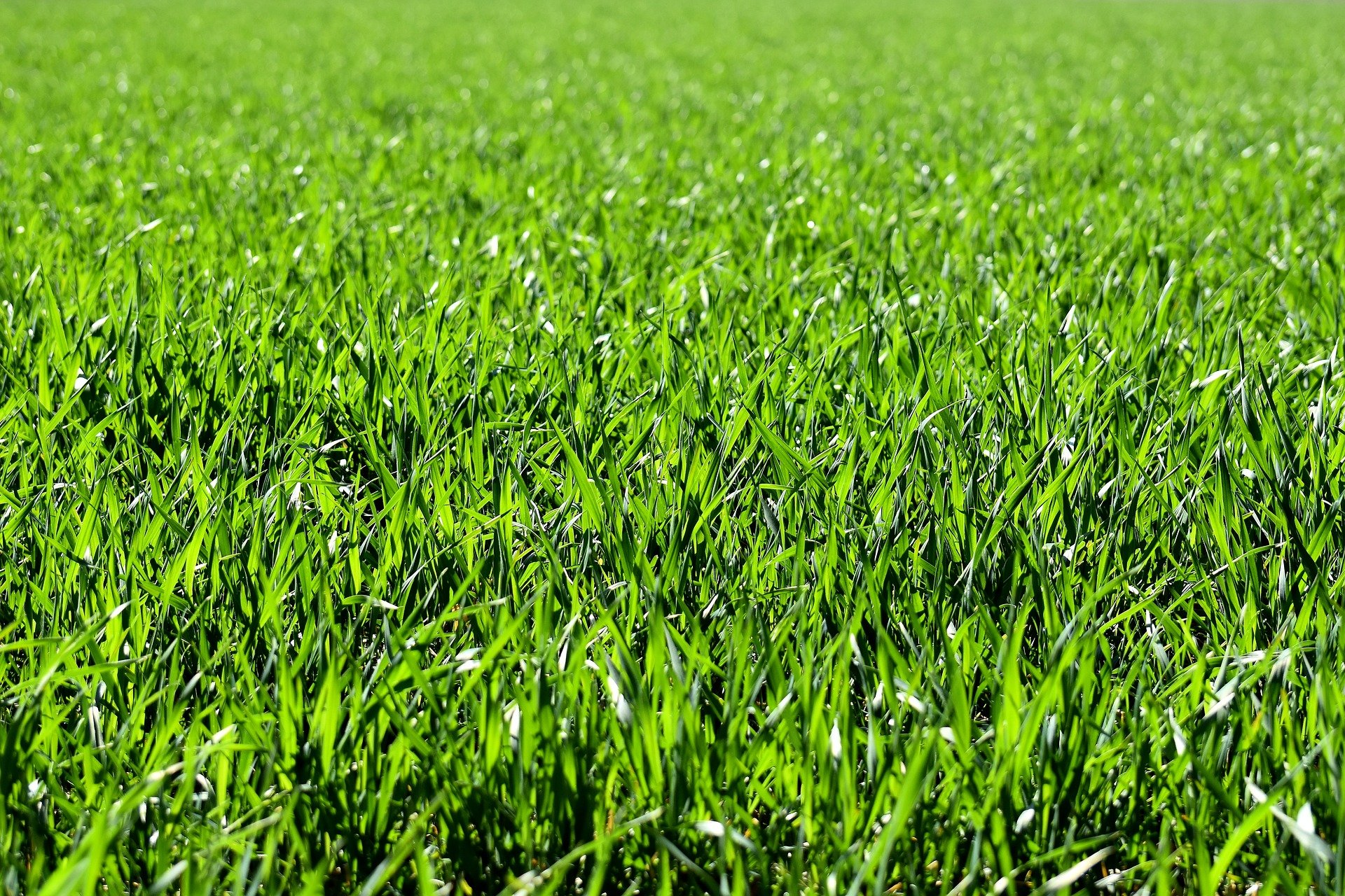 meadow 2184989 1920