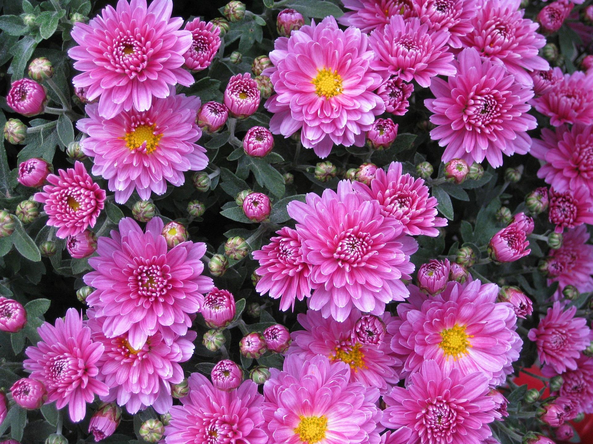 flowers 10201 1920