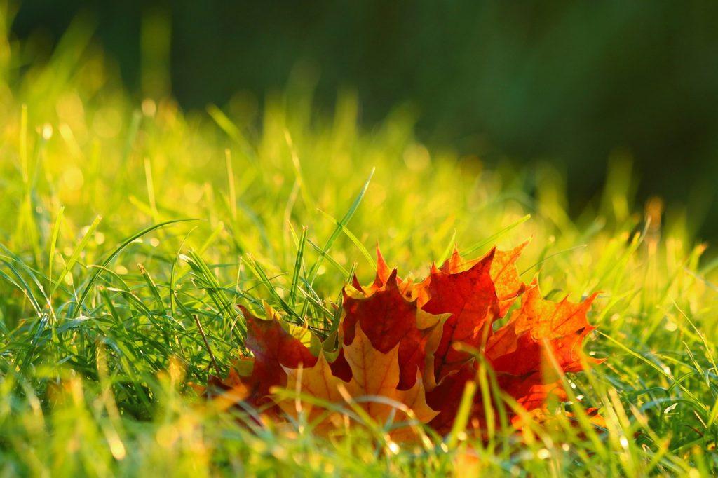 leaves 4574860 1280